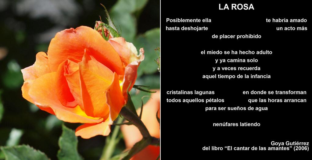 La Rosa (poema). Foto: E. Velo