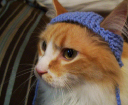 Funny Knit Winter Hats For Cats