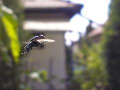 Rptben a...? (..o..z..) Tags: camera digital fly olympus compact rovar gymlcs bogr lgy c500z rptben
