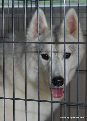 Petsmart Dog Adoptions Nj
