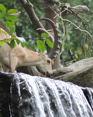 Risky Drink (lukeflickr) Tags: summer holiday june zoo waterfall singapore singapura 2010
