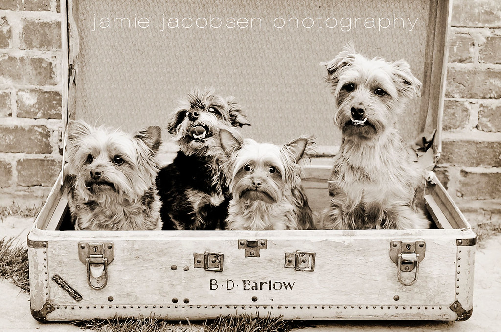 boise_dog_photographer_10