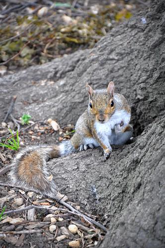 ShoppingSquirrel