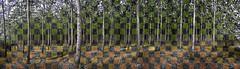 Black and White, or Color? (Jibby!) Tags: blackandwhite bw panorama color tree monochrome oregon near farm infinity handheld boardman endless