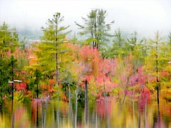 Autumn in New Hampshire (Stanley Zimny) Tags: park autumn trees tree fall nature water colors leaves automne catchycolors leaf colorful colours seasons natural fallcolors herbst newhampshire nh autumncolors fourseasons autunno autumnal colorexplosion 4seasons northconway refflection jesiennie
