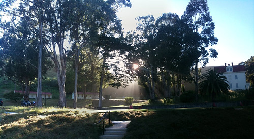 Sunlight through the trees at Cavallo Point