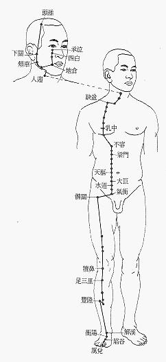 足陽明胃經經筋圖