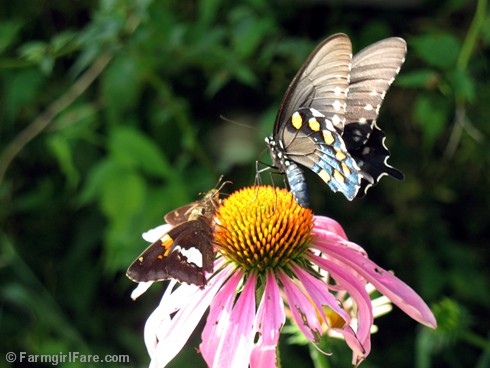 Attracting Pollinators 1