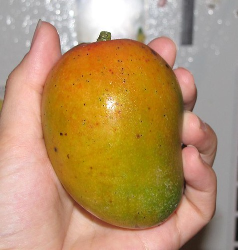 last of the mangoes