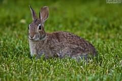 rabbit grass animal backyard 70200f28is
