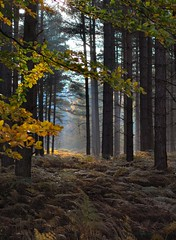 Autumn in the Woods (Jennie Anderson) Tags: autumn trees sunlight mist fall nature forest woods front explore page regents serenitynow windsong autumnfall flickrsbest allthatglitters magicalplaces sceniclandscapes myfavoriteforestphoto jennieanderson naturemasterpiece absolutelystunningscapes rubyphotographer dragonflyawards dreamsilldream lapetitegalerienopeople earthnaturelife miracleofnatur geniesnaturegallery