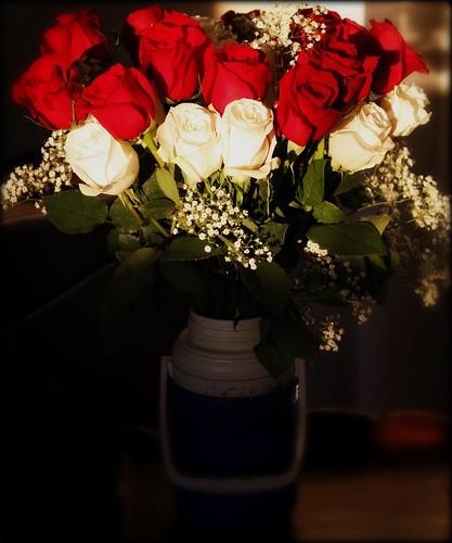 flowers 095