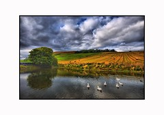 Cool Rural View  - Six White Geese on  Duck Pond (Magdalen Green Photography) Tags: nature cool fields hdr duckpond greenfields scottishlandscape scotlad naturelandscapes coolruralview iaingordon sixwhitegeese