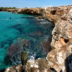 Green Cormorants nesting on the rocky coast of Menorca (Bn) Tags: spain topf50 lagoon unesco oxygen biospherere
