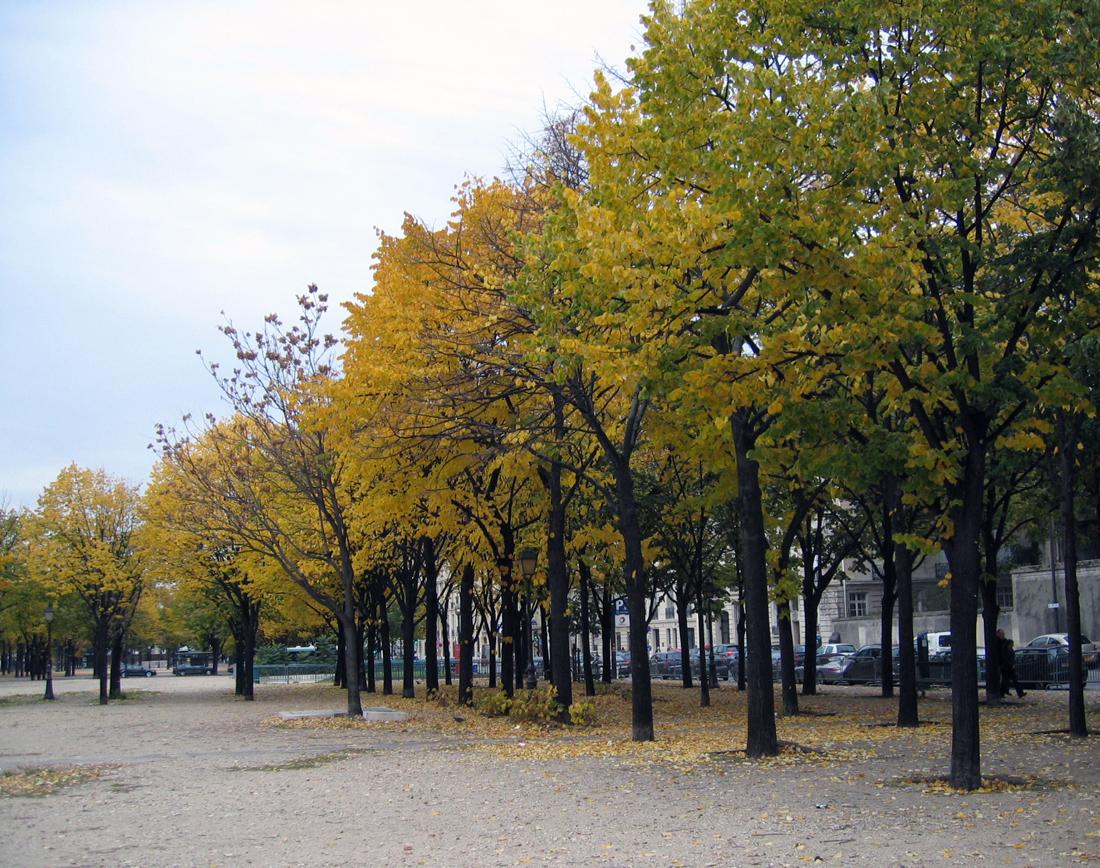 Outono // Autumn
