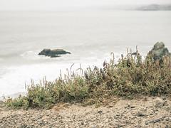Beach Fringe, Sutro Baths, San Francisco (Sharon Mollerus) Tags: landsend sutrobaths sutropark coast ocean pointlobos sutrodistrict weeds sanfrancisco california unitedstates us cfpti17