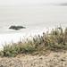 Beach Fringe, Sutro Baths, San Francisco
