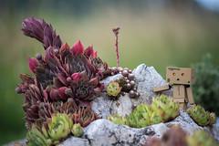 Little explorer (slo.Metallc) Tags: nature outdoor danbo danboard rock cactus dyxum minolta minoltaaf70210mmf4 sonyilca99m2