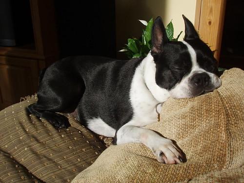 Virginia snoozing