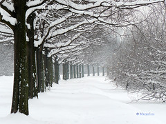 White scenery (MargoLuc) Tags: winter milan landscape lombardy snowyscenery