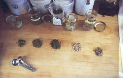 herbal tea in the making (julia:elise) Tags: film tea scanned herbaltea inmykitchen medicinalplants canonetql17giii ididit herbalism fuji800 ihaveanewobsession