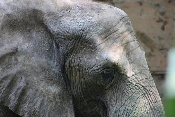 2010壽山動物園0014