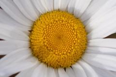 (roney) Tags: chile flowers patagonia flores flower southamerica plantas natureza flor torresdelpaine americadosul seron agrupada patagonia2009 grupochile grupoflores