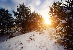 Winter Sun II (Philipp Klinger Photography) Tags: christmas xmas blue winter light vacation sky orange sun holiday snow cold tree nature grass yellow clouds forest landscape back nikon holidays warm frost er angle bright wide poland philipp gra klinger zielona lubuskie d700 wojewodztwo lubusz