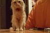 Mi Tuluz (Moonlight ~*) Tags: gato animales tuluz