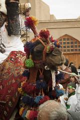 Camel - Muharram Ashura