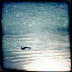 * (miu37) Tags: light sky bird beyondthesea 短歌 ruihayasaka 早坂 類