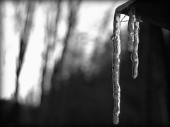 Frozen snapshot (aleventu) Tags: wood winter frozen blackwhite nikon inverno freddo frio hielo bianconero ghiaccio cadore d40 domegge