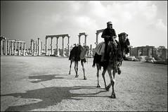 syria #20 (quixotic54) Tags: leica bw film blackwhite fuji 28mm rangefinder mount summicron camel 400 syria neopan mp 28 coolscan palmyra asph 9000 xtol leicamp summicronm mmount autaut nikonsupercoolscan9000ed leicasummicron28mmf20asph