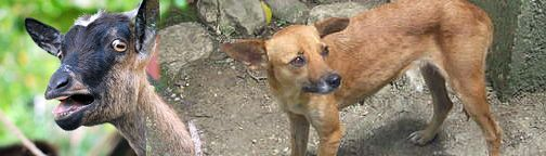 Kinship Circle - 2010-01-15 - Haiti's Animals - We Hear Their Cries, Help Is Coming 02