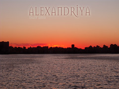 ALEXXX (spider_guitarest) Tags: trees light shadow sun sunlight mist snow tree alex nature colors alexandria backlight forest dark fantastic woods ray branch afternoon with bright taken most finepix fujifilm rays backlit brilliant mostafa favorited daif s1500 great123
