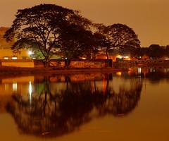 Backyard Trees (Guru Venkatesh) Tags: trees reflection water night backyard shot madras guru venkatesh topseven mywinners