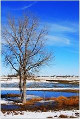Winter Blue (coopsgirl22) Tags: blue winter sky snow cold tree ice water fence nebraska land supershot flickrsbest