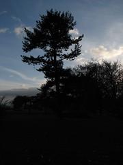 Schattenbaum (guidolo) Tags: park autumn sunset shadow tree dark sonnenuntergang herbst poland polska polen kontrast schatten baum dunkel gdynia drzewo schattenriss gdingen