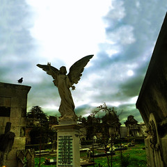Anxos & corvos (roi alonso) Tags: sky bird cemetery angel clouds cementerio explore cielo nubes ceo crow cuervo corvo angelsdemons cemiterio paxaro anxo angelesydemonios prajo anxosecorvos