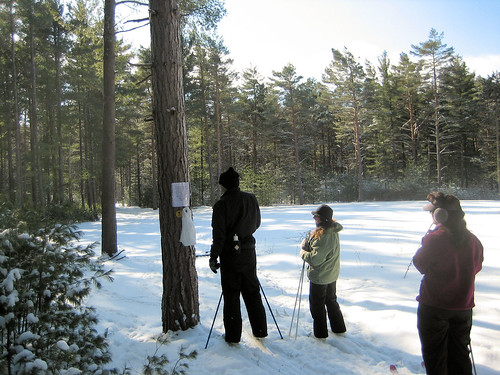 Brasher State Forest Cross Country Ski and Snowshoe Run