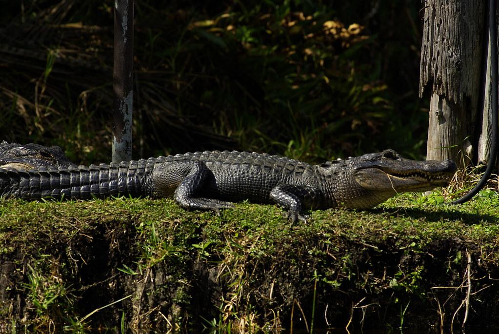 大沼澤國家公園