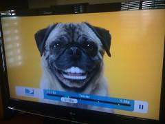 Doggie dentures