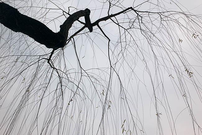 西湖樹06