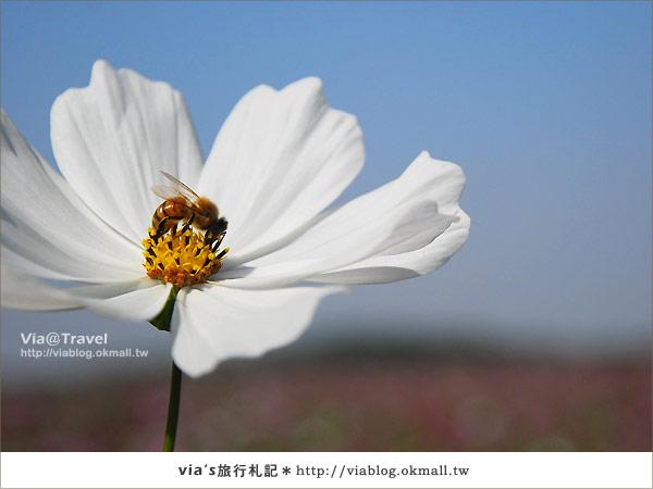 【2010春節旅遊】春節假期~南投市貓羅溪沙雕藝術節25