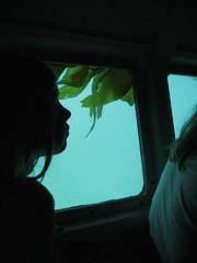 under the sea (chasingbluebirds) Tags: island avalon 2010 santacatalina