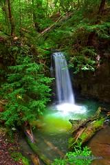 Sempervirens Waterfall - California's Big Basin State Park (Darvin Atkeson) Tags: california park santa usa green america forest us waterfall big state basin cruz redwood redwoods cascade cascada sempervirens darvin atkeson  darv   liquidmoonlightcom