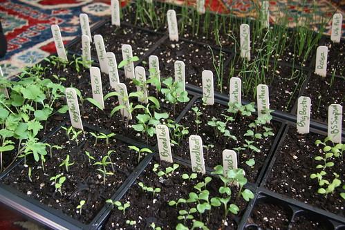 seedlings 015