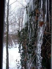 Icicles outside my window