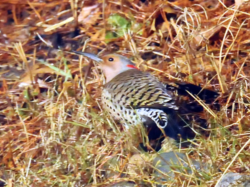feb flicker