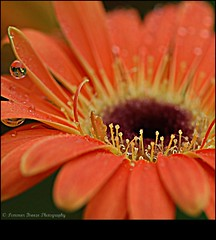 for those who love flowers.... (Smme eeZe) Tags: orange flower macro na